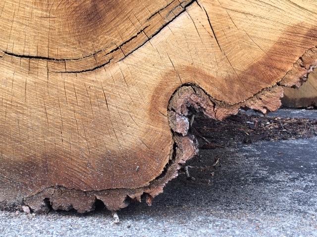 Deel van boomstam met schors